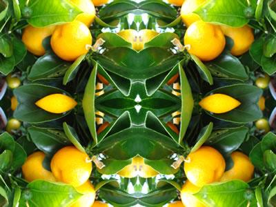 Dream art picture wandbilder poster galerie pflanzen for Raumgestaltung pflanzen